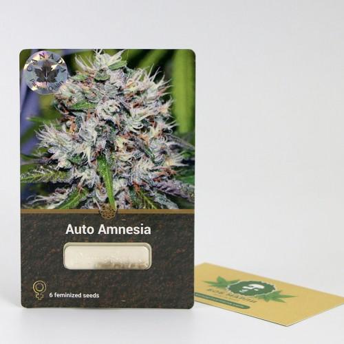 თესლი Auto Amnesia