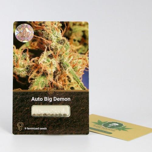 თესლი Auto Big Demon
