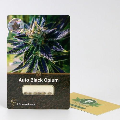 თესლი Auto Black Opium
