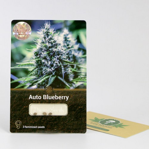 თესლი Auto Blueberry Divine Seeds
