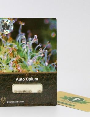 Auto Opium