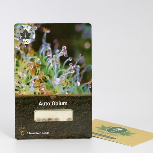 თესლი Auto Opium