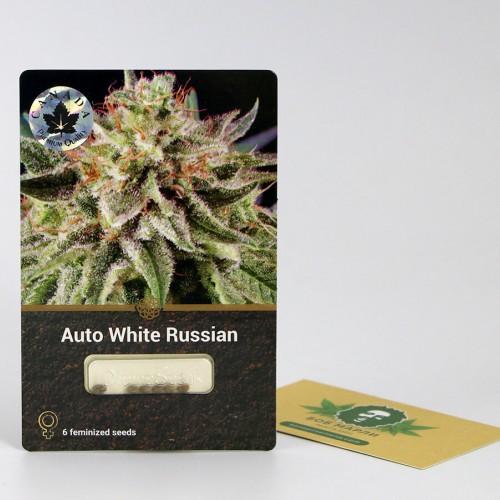 თესლი Auto White Russian