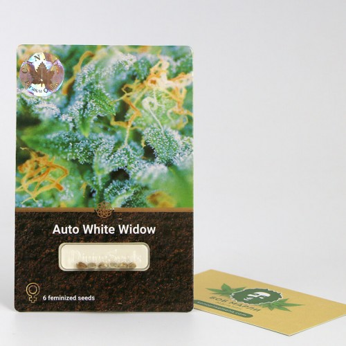 თესლი Auto White Widow
