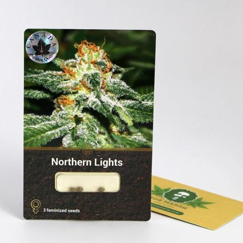თესლი northern-lights