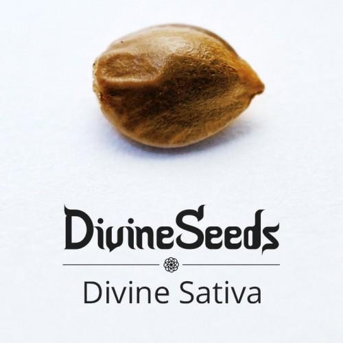 თესლი Divine Sativa - ფოტო 1