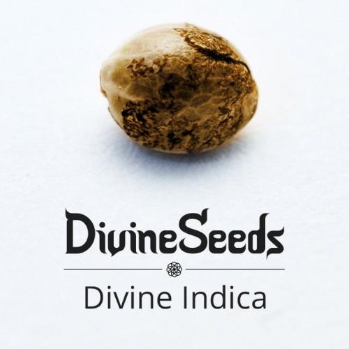 თესლი Divine Indica - ფოტო 1
