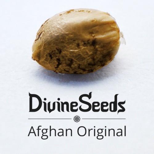 Afghan Original