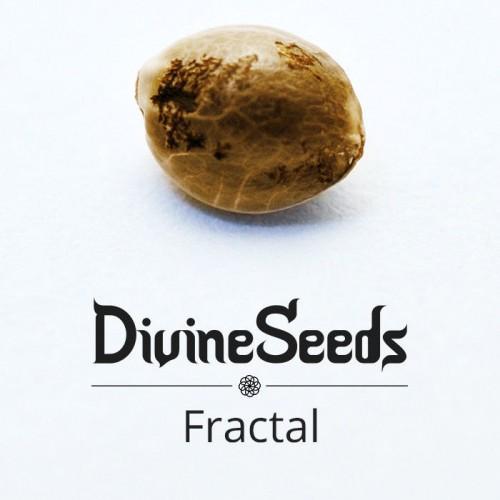 თესლი Fractal - ფოტო 1