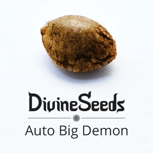 თესლი Auto Big Demon - ფოტო 1