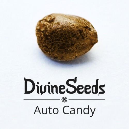 თესლი Auto Candy - ფოტო 1