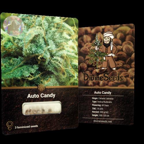 ყიდვა თესლი Auto Candy