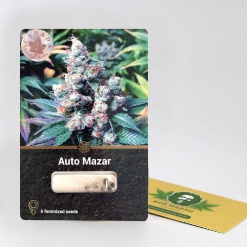 ყიდვა თესლი Auto Mazar