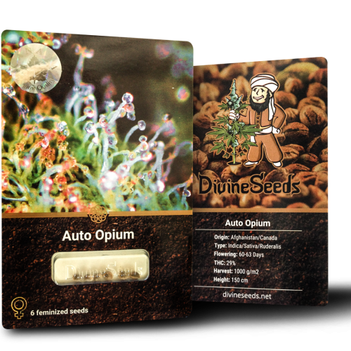ყიდვა თესლი Auto Opium