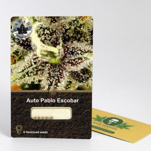 კენჭი თესლი Auto Pablo Escobar