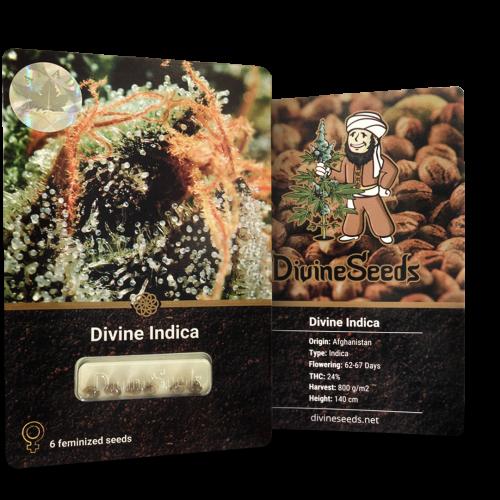 ყიდვა თესლი Divine Indica