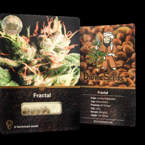 ყიდვა თესლი Fractal